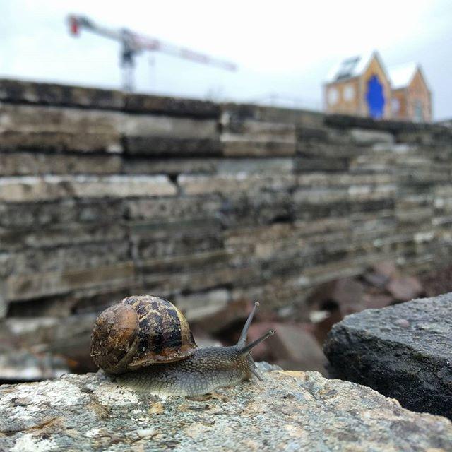 slak berlijnplein ecokathedraal kendalljenner
